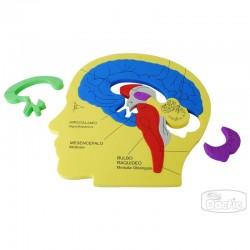 Puzzle Cerebro Humano